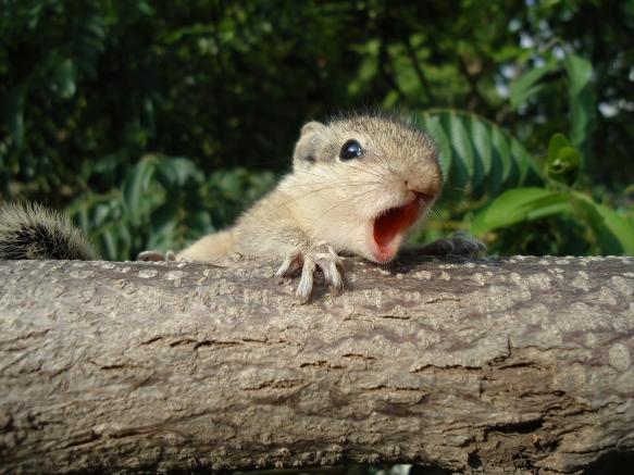 baby-squirrel-17082408.jpg